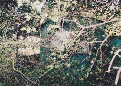 Hiding in a bush...